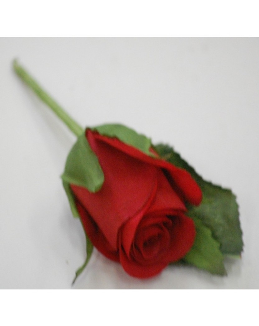 Silk Red Rose Button Hole Artificial Trees Plants Artificial