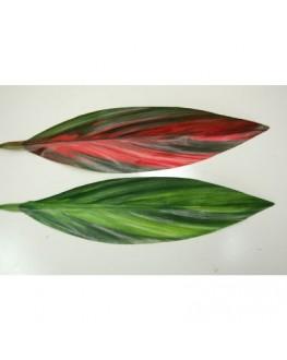 Green Red Cordyline Leaf
