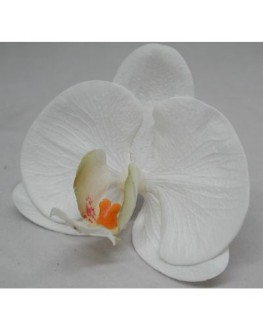 Latex Phalaenopsis Orchid Head White Yellow/green