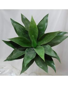 Artificial Large Green Agave Succulent Plant Cactus Echeveria 42cm wide x 40cm high