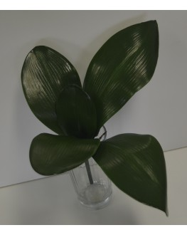 Phalaenopsis Orchid Green Leaves Leaf