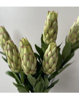 AUSTRALIAN NATIVE FLOWER STEMS GREEN PROTEA BUD FLOWERS ARTIFICIAL FAKE SILK STEM