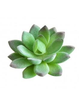 Artificial Green Succulent Plant Cactus Echeveria  9cm high x 5cm wide