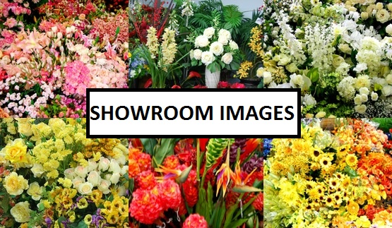 Floral Land Showroom